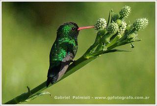 Gabriel PalmioliIMGP8758R1GPF